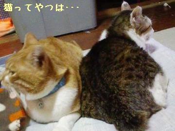 091103_heijiren.jpg