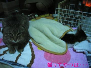 20100203_heijihayato.jpg