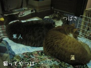 20100302_tsubasahayatoren.jpg
