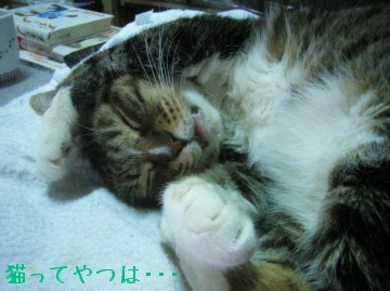 20100305_tsubasa.jpg