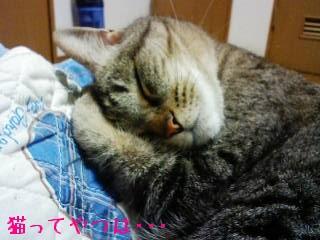 20100308_shami.jpg