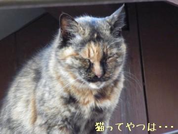 20100405_moppu.jpg