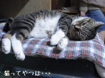 20100405_tsubasa.jpg
