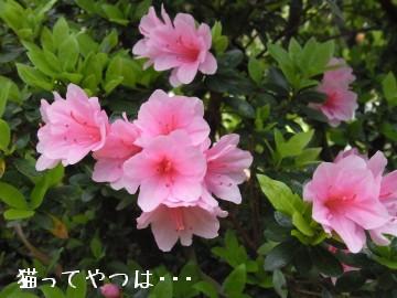 20100406_kurumetsutsuji.jpg