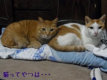 20100410_gintayui.jpg