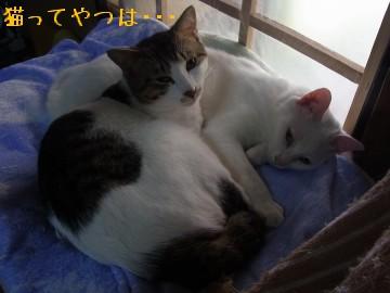 20100501_chiiryou.jpg