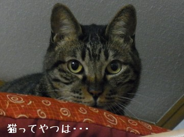 20100501_kento.jpg