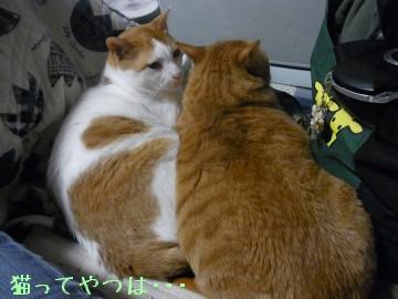 20100508_gintayui.jpg
