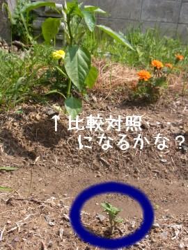 20100529_meikuin.jpg