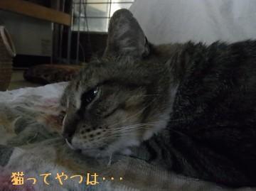 20100602_tsubasa.jpg
