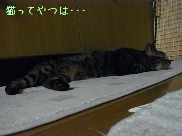 20100611_kento1.jpg