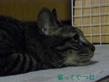 20100611_kento2.jpg