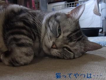 20100613_kiri.jpg
