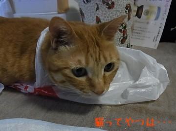 20100620_yui.jpg