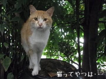 20100624_chashiro.jpg