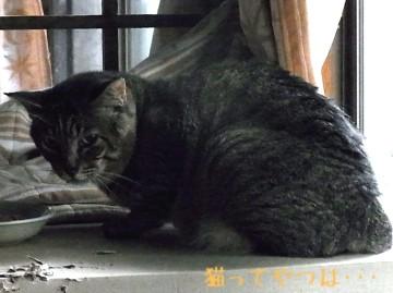 20100703_yukichi.jpg