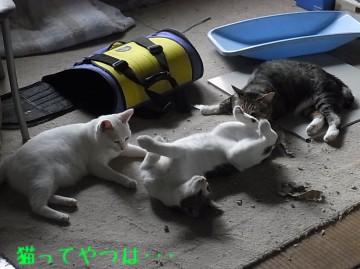20100726_tsubasachiiryou.jpg