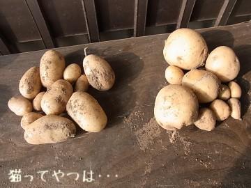20100730_potato.jpg