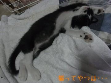 20100731_mamoru.jpg