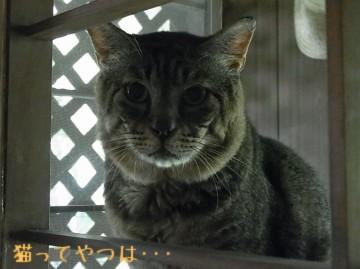 20100805_yukichi.jpg