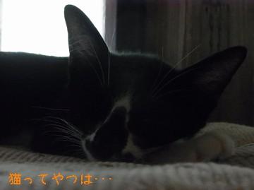 20100916_mamoru.jpg