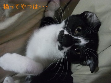 20101102_mamoru2.jpg