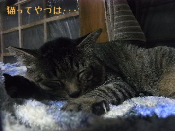 20101112_yukichi.jpg