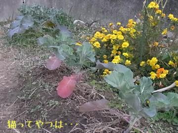 20101127_broccoli.jpg