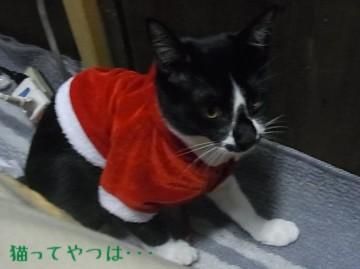20101130_mamoru.jpg
