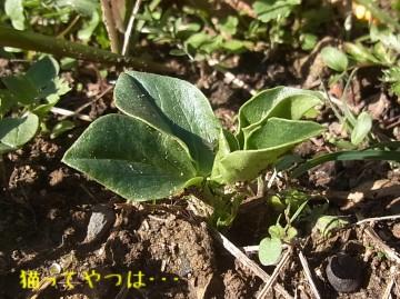 20101205_soramame.jpg
