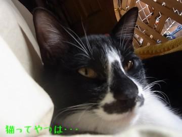 20101209_mamoru.jpg