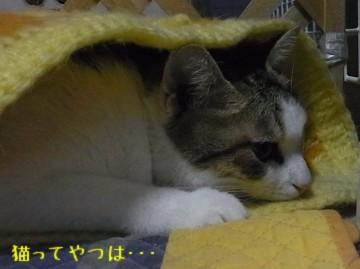 20101213_rara2.jpg