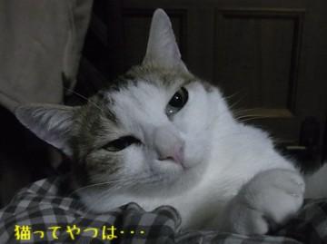 20101213_rara3.jpg
