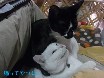 20101217_chiimamoru3.jpg
