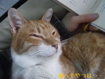 20101217_ren.jpg