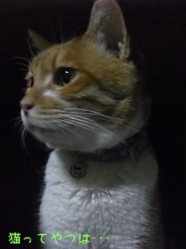 20110125_ren.jpg