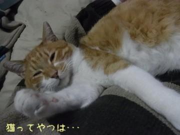 20110301_ren3.jpg
