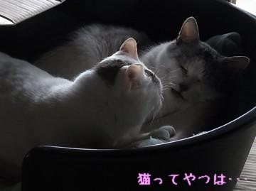 20110314_pakurui.jpg