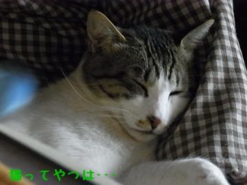 20110322_ryou.jpg