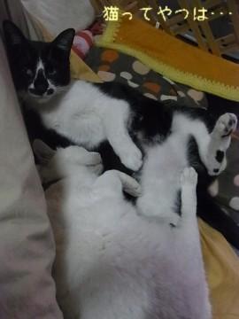20110329_chiimamoru2.jpg