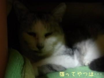20110406_paku.jpg