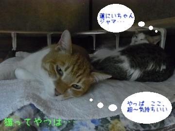 20110413_renrara.jpg