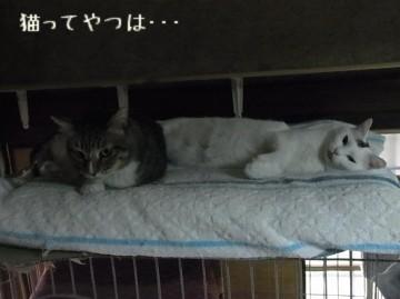 20110424_tsubasarui.jpg