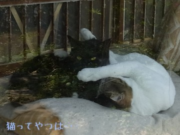 20110425_ryouchoko.jpg