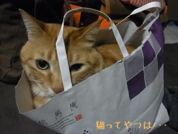 20110519_yui.jpg