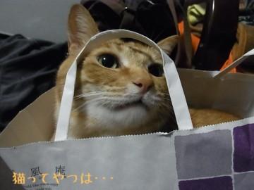 20110519_yui2.jpg