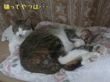 20110521_tsubasaryou.jpg