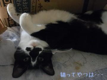 20110530_mamoru2.jpg