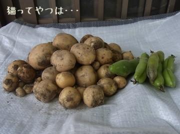 20110603_potates.jpg
