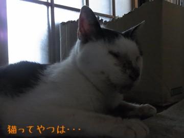 20110629_horu.jpg
